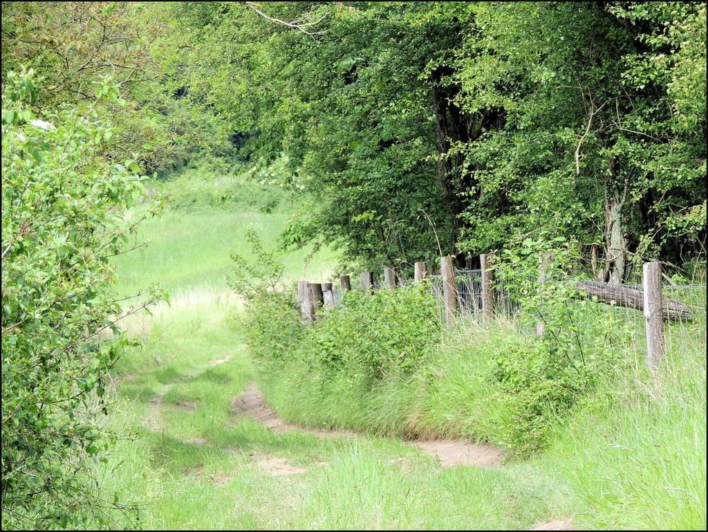 Chemin - Vivières