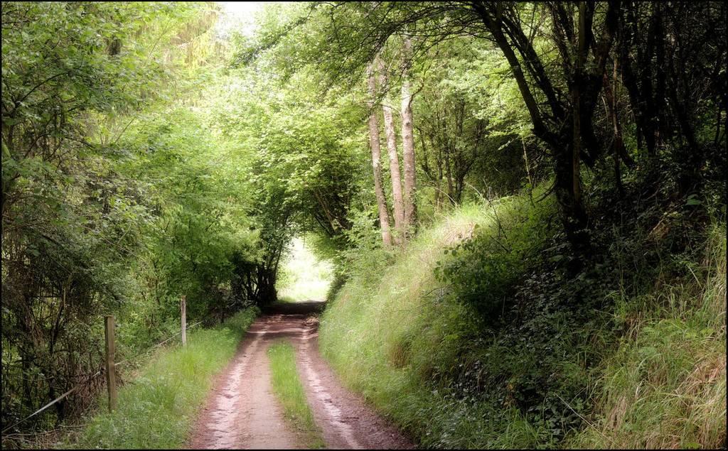 Chemin forestier - Vivières